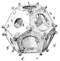 DOD-4001 -  *  dodecahedron pelletized&#013&#013 *  Hollow object to twelve faces interconnected by the pentagons , each pierced with a hole diameter different from its neighbor .  Each angle is also occupied by a ball.